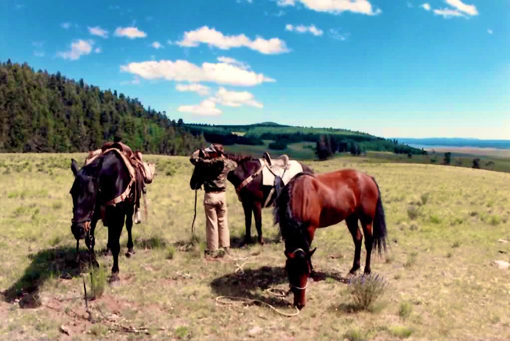 backcountry horses